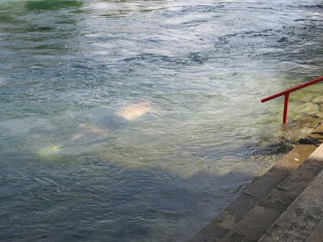 Kaum sichtbar für Passanten gründelt der Schatztaucher entlang des Aareufers.