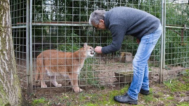 Ein Mann streichelt einen Puma durch ein Gitter.