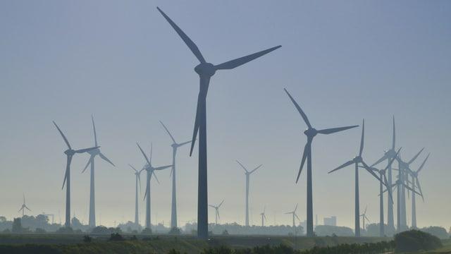 Windpark im Morgenlicht.