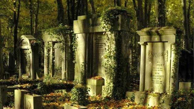 Mit Efeu überwachsene Grabsteine stehen im Baumschatten der Abendsonne.