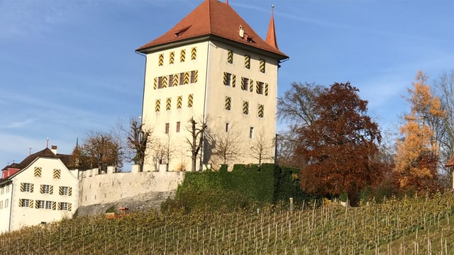 Im Vordergrund Weinreben, im Hintergrund das Schloss Heidegg.
