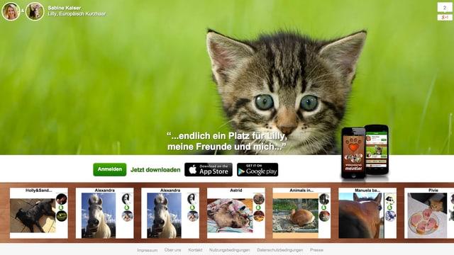 Die Startseite von Meintier.com, ein süsses Kätzchen.