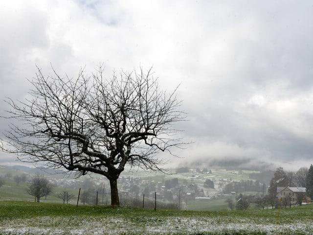 Grüne Wiese mit Schnee und Graupel, alles andere als frühlingshaft. Grauer Himmel.