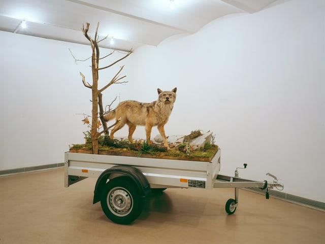 Wolf auf Anhänger