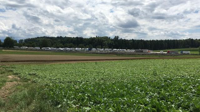Feld, Wald im Hintergrund, davor parkierte Wohnwagen