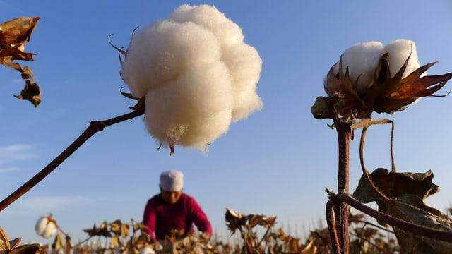 Bauer auf Baumwoll-Feld