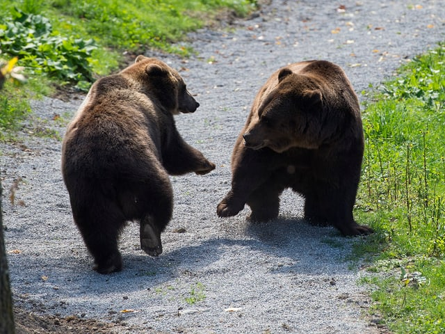 Bären im Berner Bärenpark