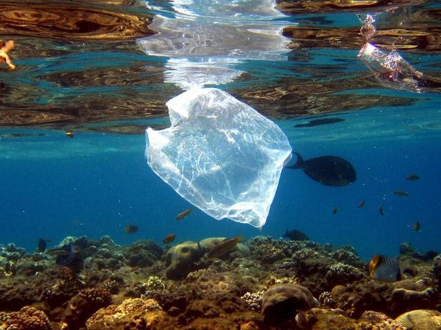 Transparenter Plastiksack schwebt über Korallenriff im Roten Meer.