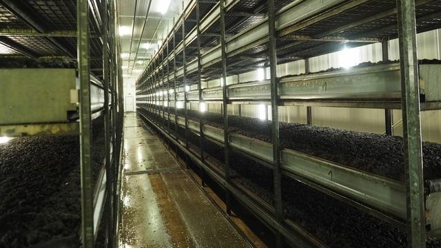 Blick in eine Produktionshalle, wo noch keine Pilze gewachsen sind
