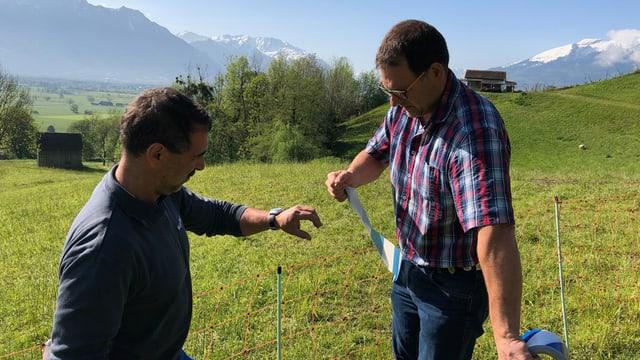 Zwei Männer reissen Plastikbänder Hintergrund Wiese mit Schafen