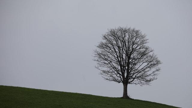 Einsamer Baum auf grüner Wiese mit Himmel im Hintergrund.