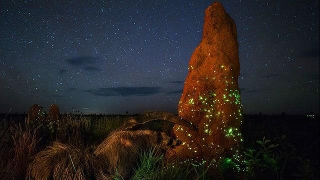 Ein Ameisenbär ernährt sich an einem Termitenhügel in der Nacht.