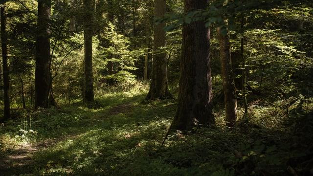 Wald in Konolfingen.
