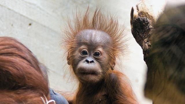 Video «Der globale Zoo» abspielen