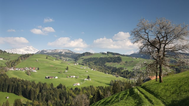 Panorama mit bewaldeten Hügeln