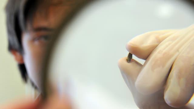 Ein Mitarbeiter der Ural Federal University in Jekatarinenburg untersucht einen Splitter aus seine Herkunft.