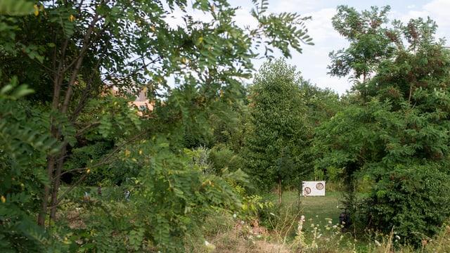 Eine Torwand steht verloren zwischen Büschen und Bäumen.