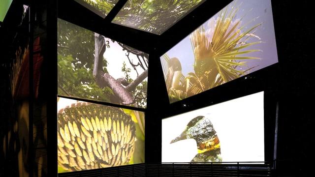 Vier grosse Videobildschirme mit Tieren und Pflanzen darauf.