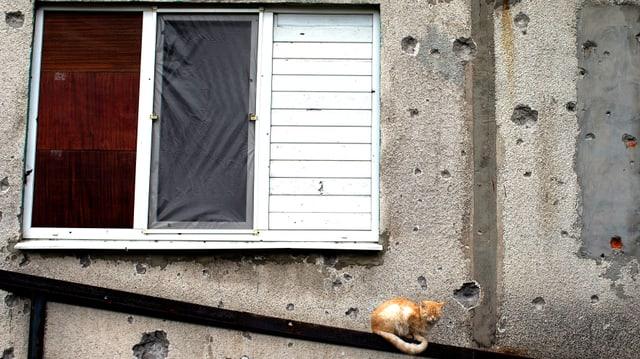 Eine Katze ruht auf einem Treppengeländer. Hinter ihr ist eine zerschossene Fassade und ein verbarrikadiertes Fenster zu sehen.