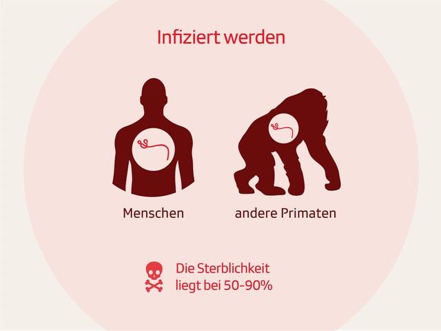 Grafik zu Infizierungsgefahr für Menschen und andere Primaten mit Sterblichkeit bis zu 15 Prozent