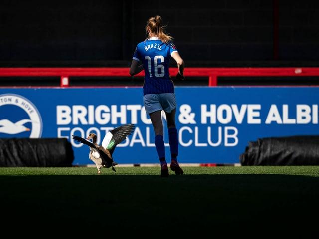 Im Spiel der FAWSL zwischen Brighton und Manchester United stürmte eine Gans aufs Spielfeld. Ellie Brazil, Stürmerin der «Seagulls» (übersetzt: Möwen), nahm sich ihr an.
