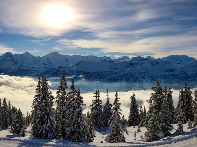 Himmel mit Wolkenschleiern, unten Schneeberge und Nebel im Tal, im Vordergrund verschneite Tannen.