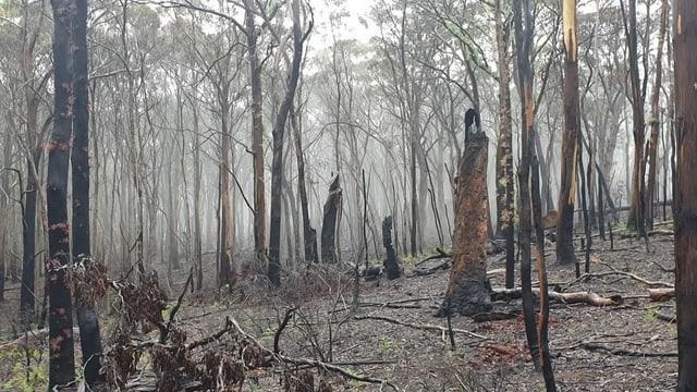 Verbranntes Waldstück