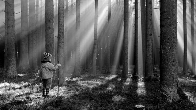 Ein Kind steht im Wald, durch den sich die Sonne bricht.