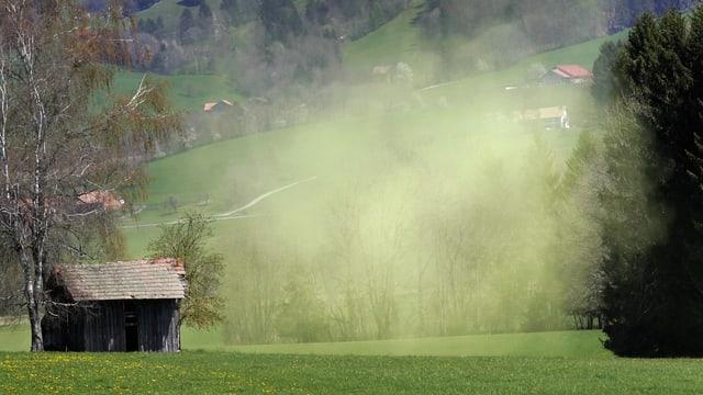 Wiese mit Hütte und Wald im Hintergrund. In der Luft eine Wolke aus Pollen in leichtem Gelb.