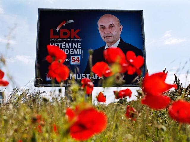 Wahlplakat in Mohnfeld