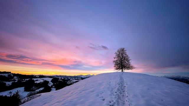 Ein Baum auf einer winterlichen Kuppe im Emmental.