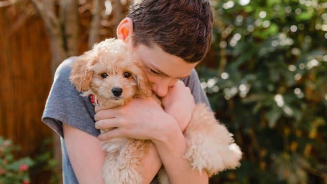 Ein Junge umarmt innig einen kleinen Hund.