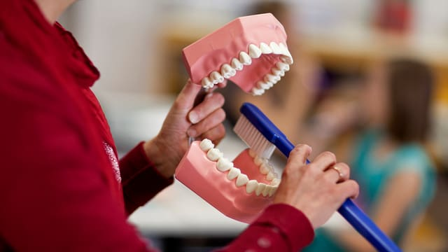 Ein übergrosses Zahnmodell und eine übergrosse Zahnbürste in den Händen einer «Zahnputzfee»