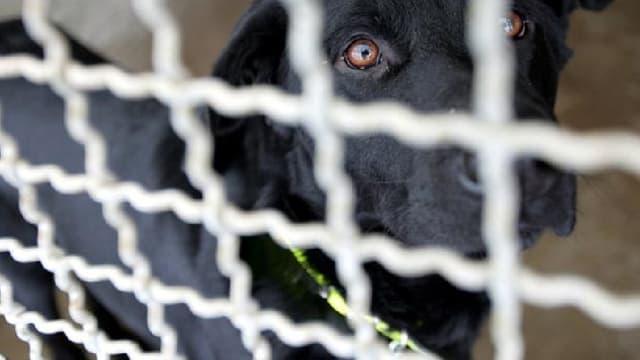 Verstösse gegen den Tierschutz: Was tun?