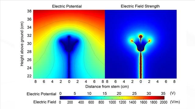 Für die Studie von Daniel Roberts wurde das elektrische Feld der Pflanzen sichtbar gemacht.