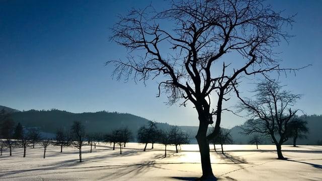 Kahler Baum auf schneebedeckter Wiese verdeckt die Sonne.