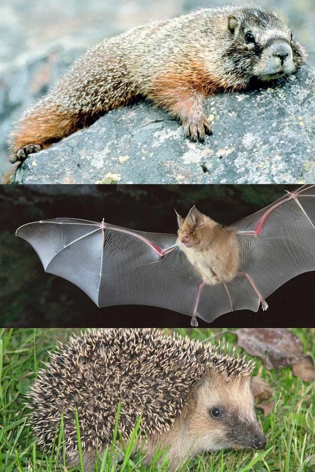 animals che fan in sien d'enviern