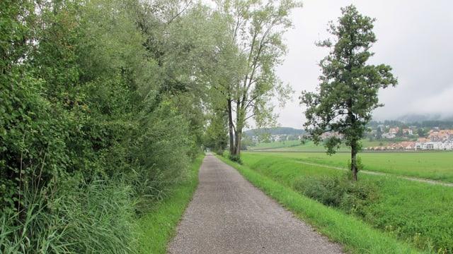 Weg durchs Grün