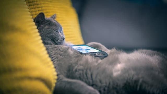 Eine Katze liegt schlafend auf einem Sofa