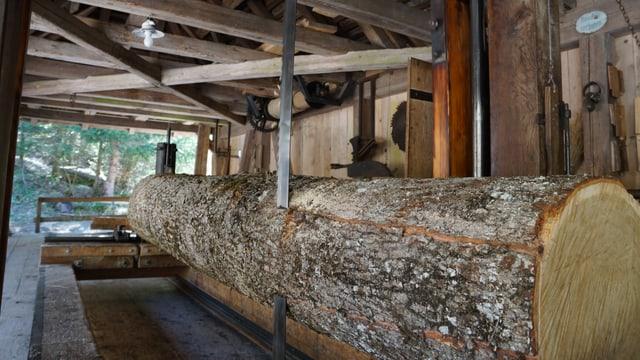 Sägeblatt der 115 Jahre alten Sägemaschine sägt durch den Baumstamm.