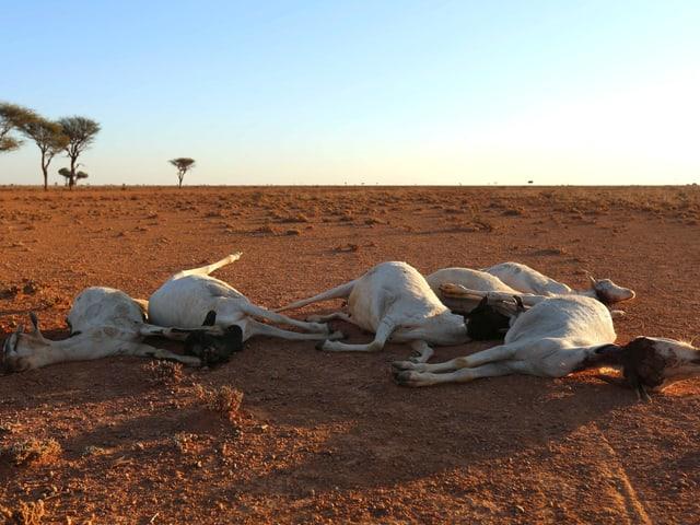 Tiere verenden in der Steppe