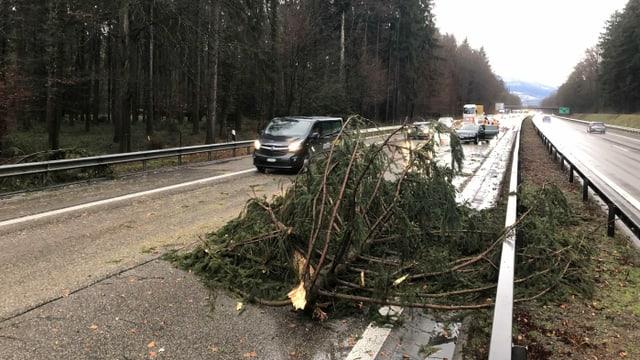 Baum auf der Autobahn
