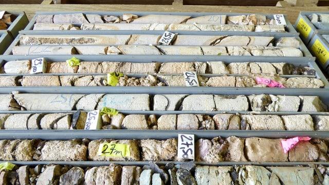 Gesteinsproben ordentlich ausgelegt und beschriftet.