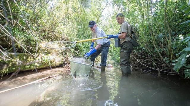 Männer mit Fischnetzen stehen in einem Bach.