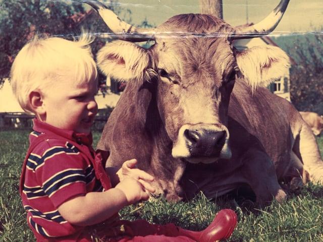 Kleiner blonhaariger Junge sitzt auf Wiese neben brauner Kuh.