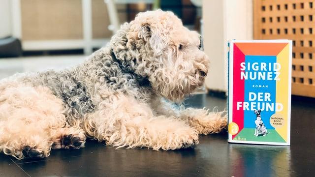 Ein Lakeland Terrier hält Blickkontakt mit der Dogge auf dem Buchcover von Sigrid Nunez Roman «Der Hund»