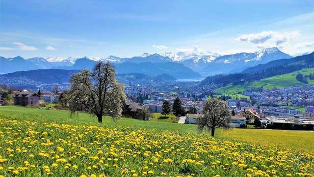 Wiese mit Löwenzahn, dahinter die Berge der Zentralschweiz.