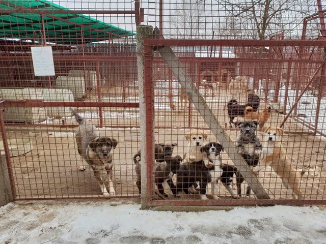Gerettete Hunde in einem Tierheim im Osten in ihren Boxen.