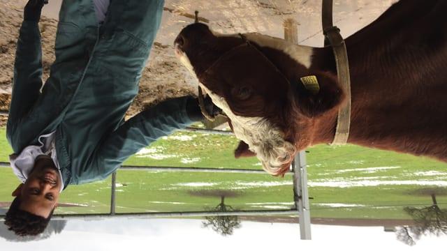 Flüchtling Tesfu Adanom aus Eritrea bringt eine Kuh in den Klauenstand.