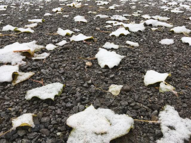 Blätter mit Schnee auf Kies.
